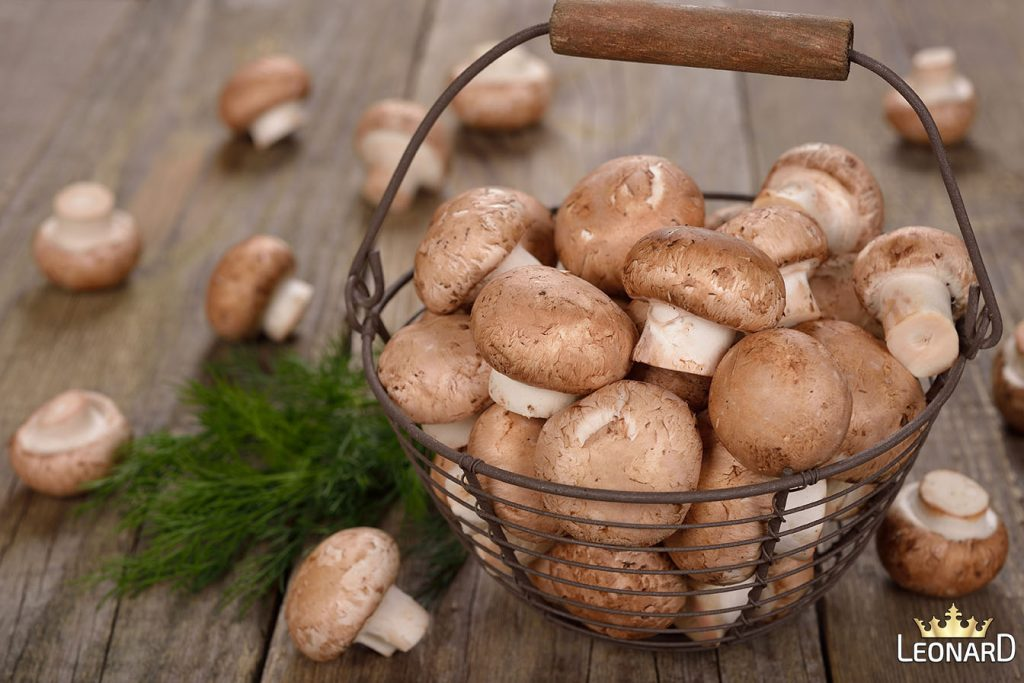 خاستگاه قارچ خوراکی