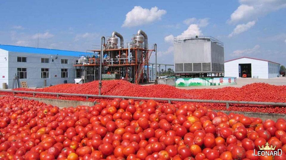 تهیه رب گوجه از گوجه های تازه در کارخانه