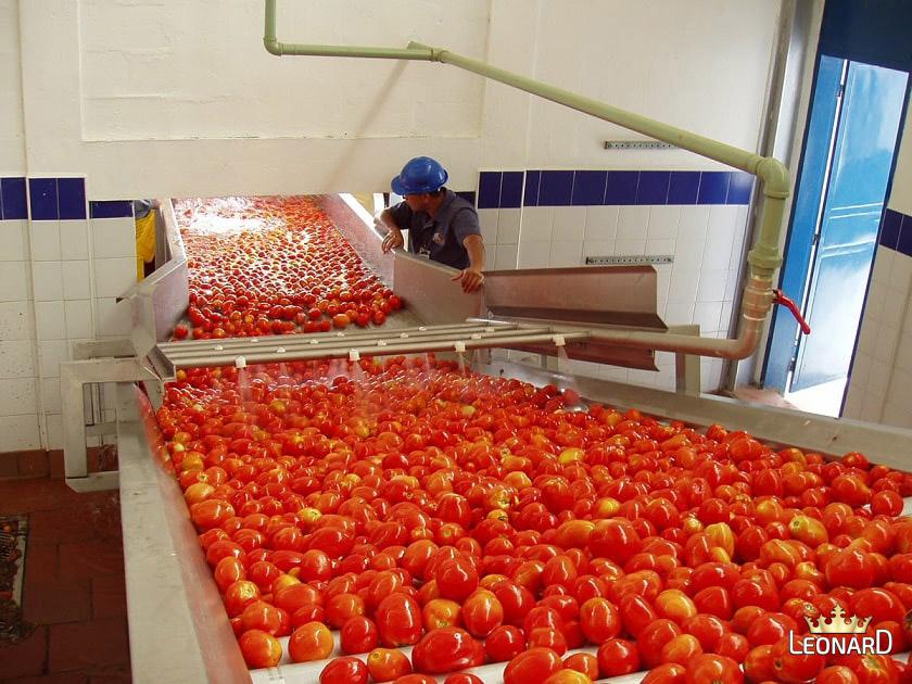 شرح طرز تهیه رب گوجه فرنگی در کارخانه